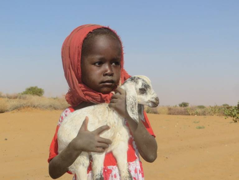 Little girl with goat 2018