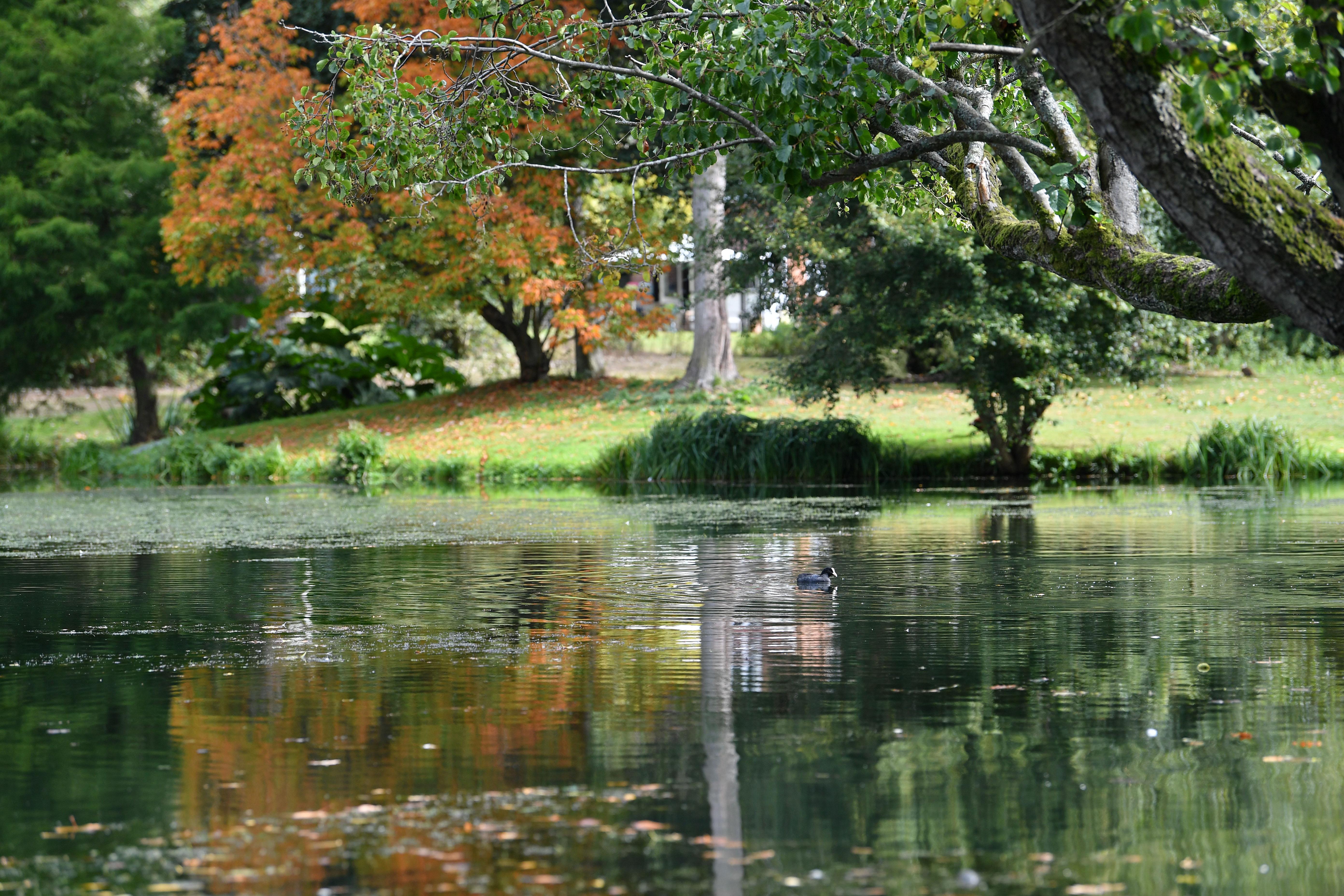 Autumn Day, Darren Pepe