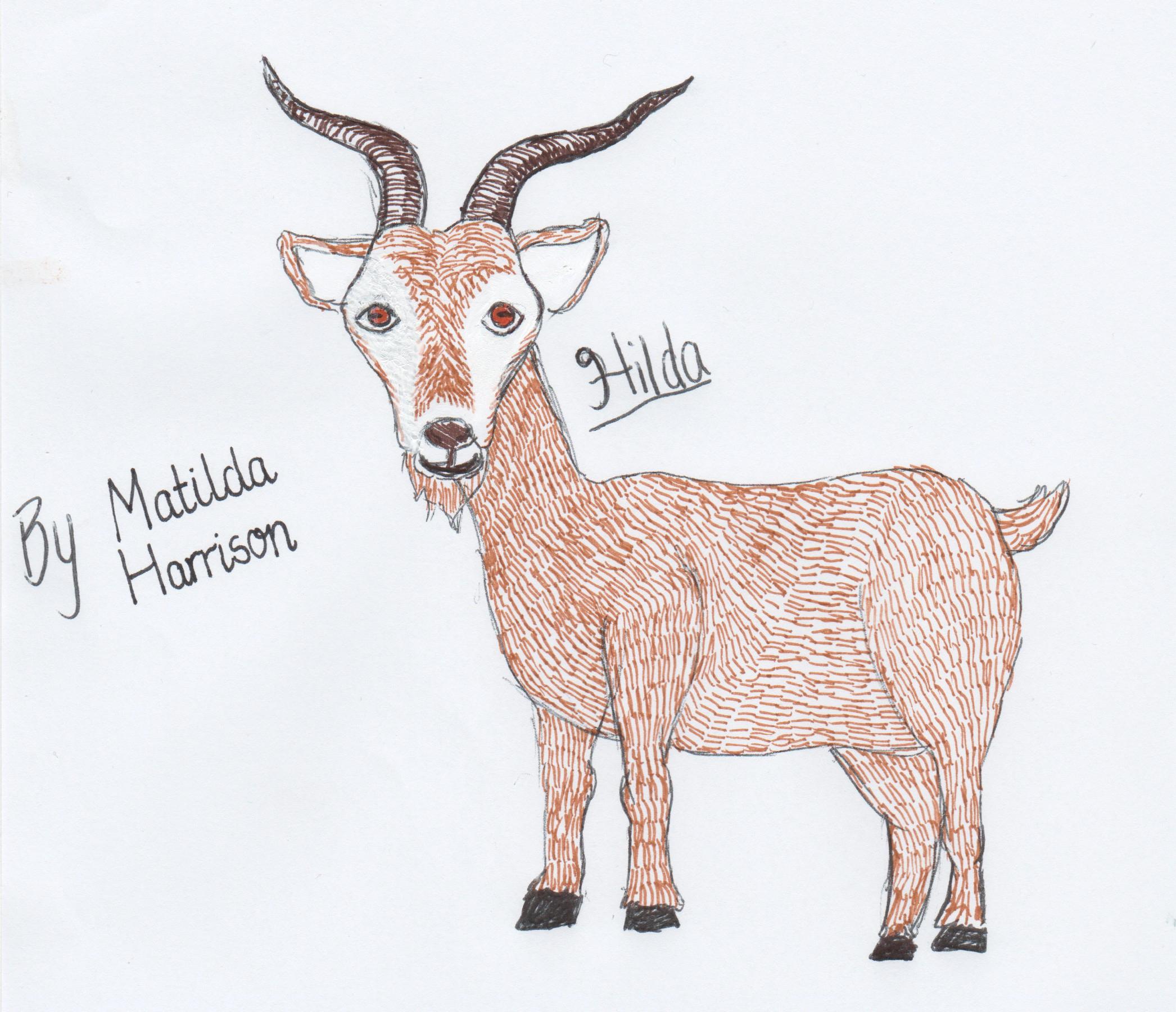 Matilda Harrison, Age 12